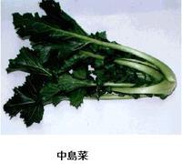 Nakajimana